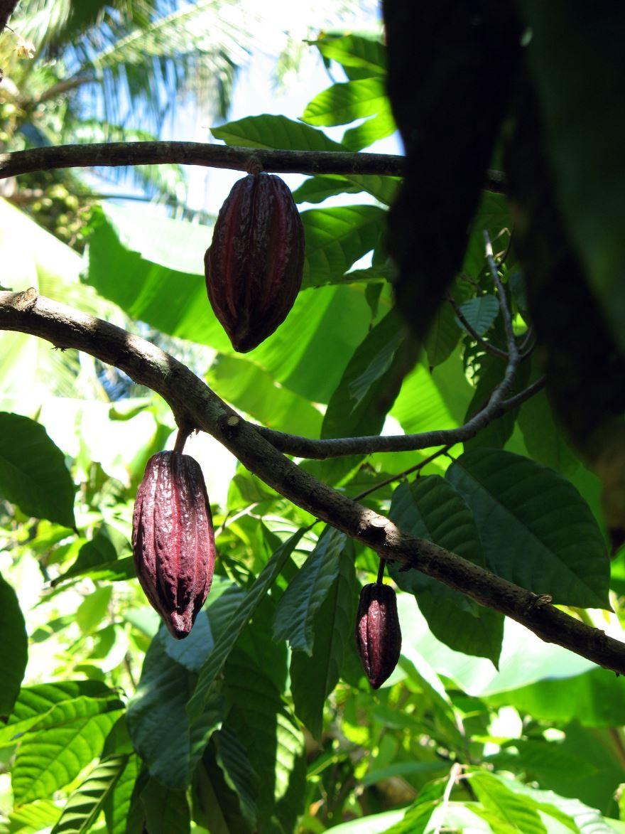 Бесплатные картинки и фото домашнего какао в хорошем качестве