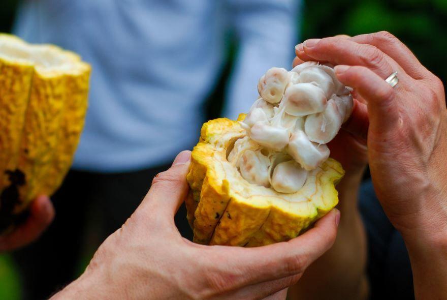Скачать фото какао, обладающего пользой и вредом онлайн