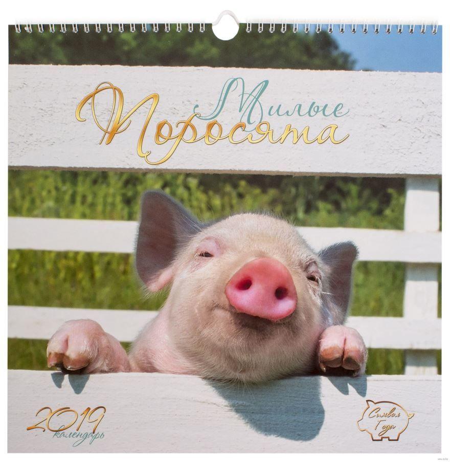 Скачать бесплатно красивое фото свиньи