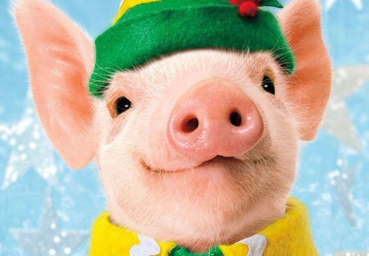 Новый год 2019 год Желтой Свиньи
