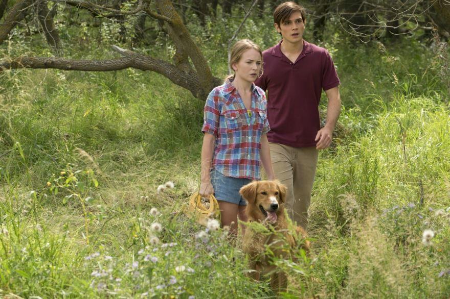 Смотреть бесплатно постеры и кадры к фильму Собачья жизнь онлайн