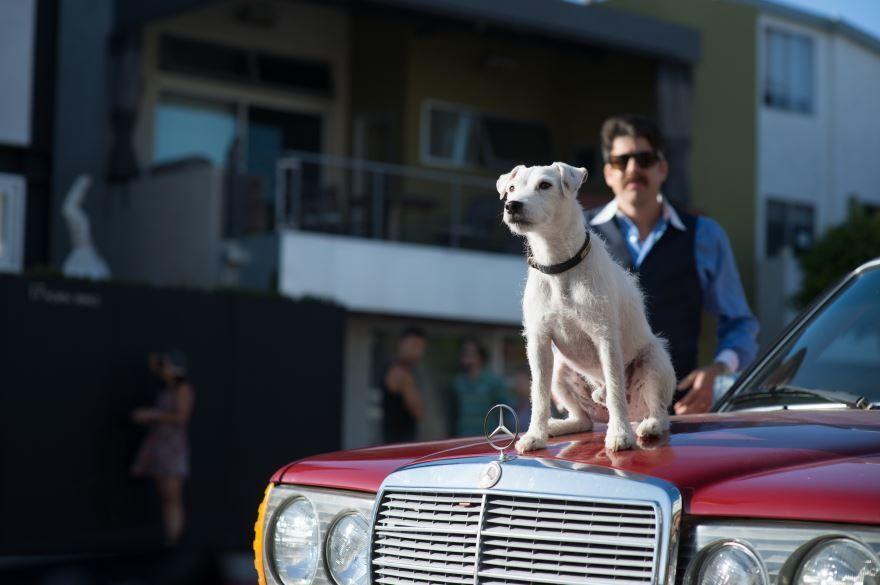 Смотреть бесплатно постеры и кадры к фильму Его собачье дело онлайн