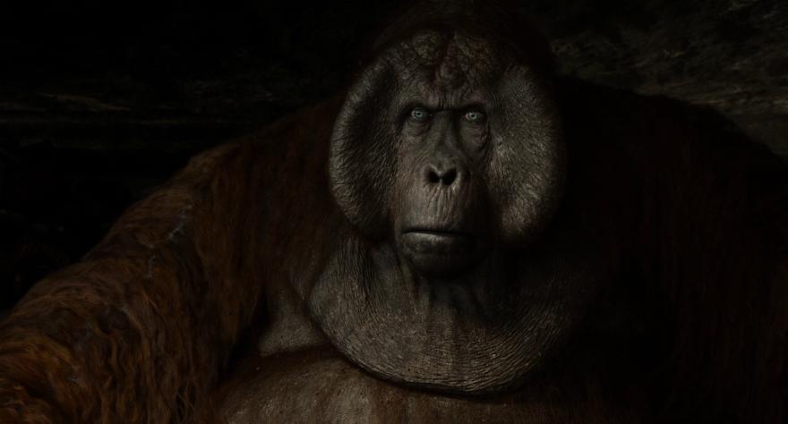Смотреть бесплатно постеры и кадры к фильму Книга джунглей онлайн