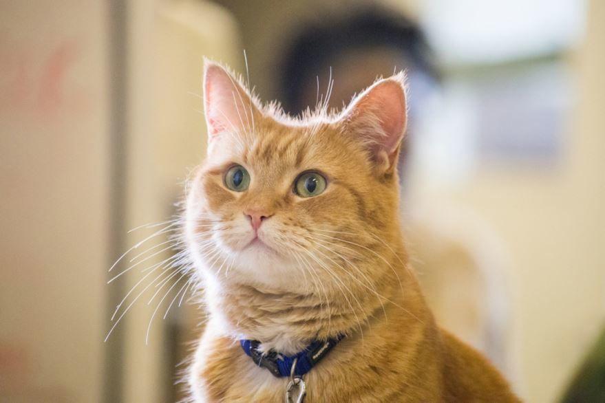 Скачать бесплатно постеры к фильму Уличный кот по кличке Боб в качестве 720 и 1080 hd