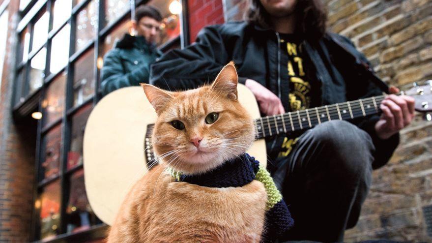 Бесплатные кадры к фильму Уличный кот по кличке Боб в качестве 1080 hd