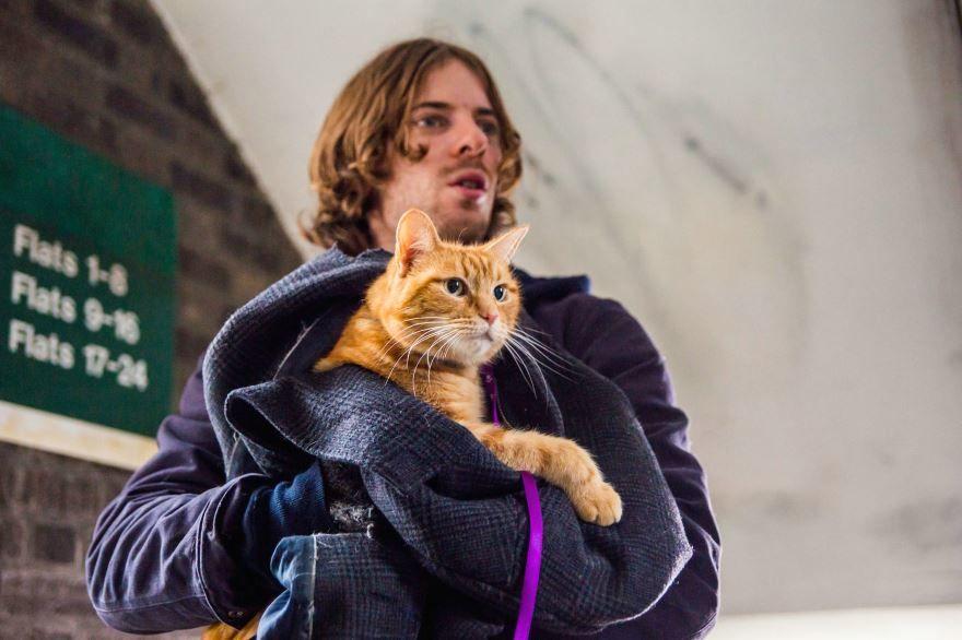 Лучшие картинки и фото фильма Уличный кот по кличке Боб 2016 в хорошем качестве