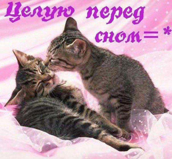 Доброй ночи красивая открытка