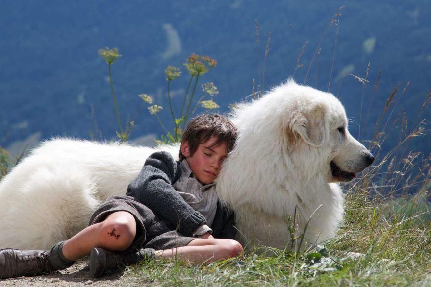 Лучшие картинки и фото фильма Белль и Себастьян: Приключения продолжаются 2015 в хорошем качестве