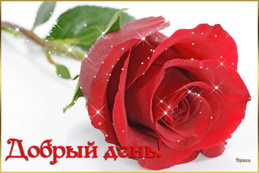 Пожелание доброго дня.