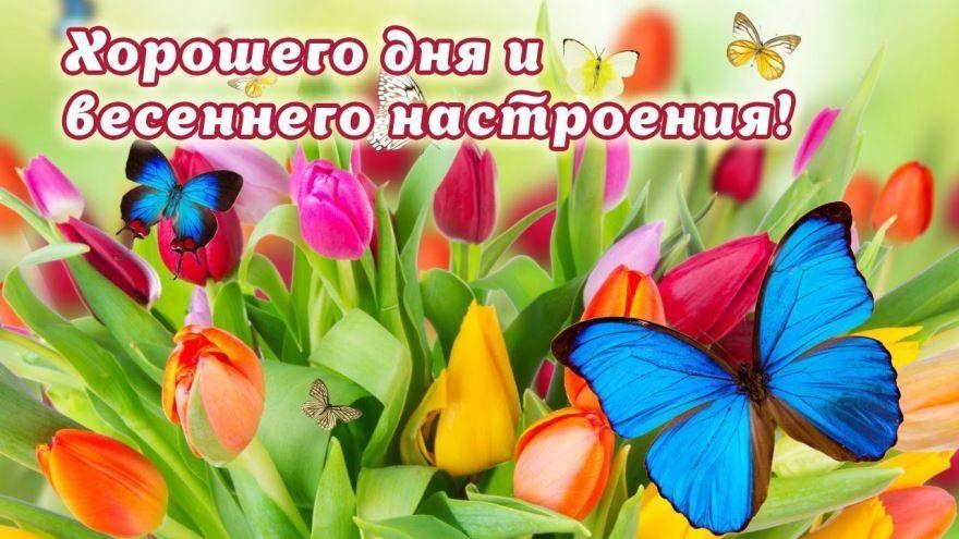 Доброго весеннего дня и хорошего настроения картинка для женщины