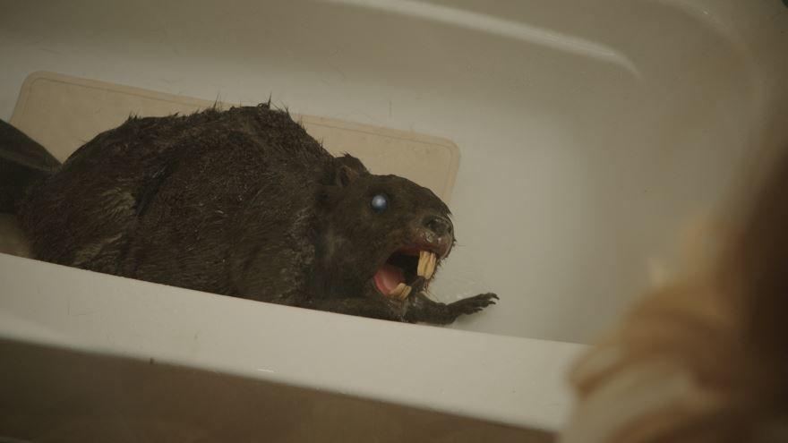 Красивые картинки и фото к фильму Бобры-зомби 2014 в hd качестве онлайн