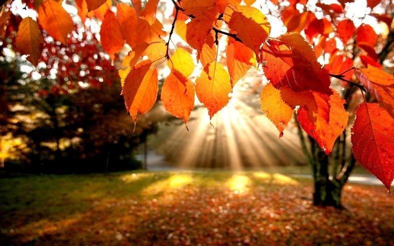 Пожелание хорошего осеннего утра