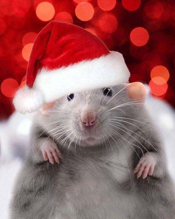 выплачивается фото картинки с наступающим новым годом с мышкой карты получает