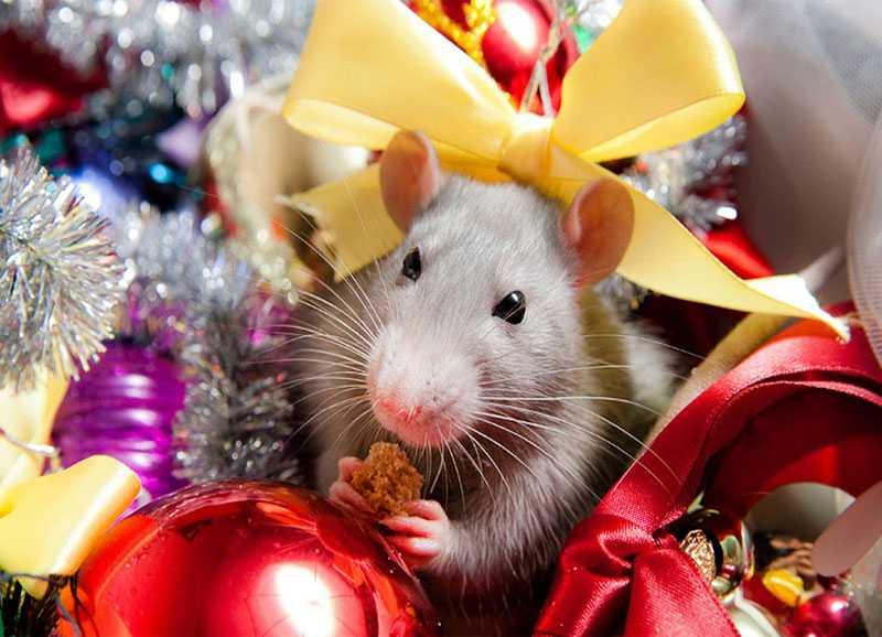 Картинки с новым годом 2020 год крысы красивые