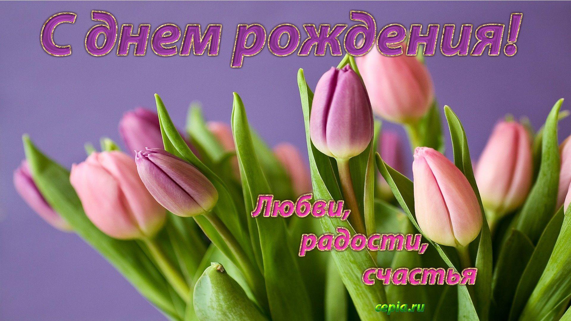 С днем рождения нежные, трогательные тюльпаны