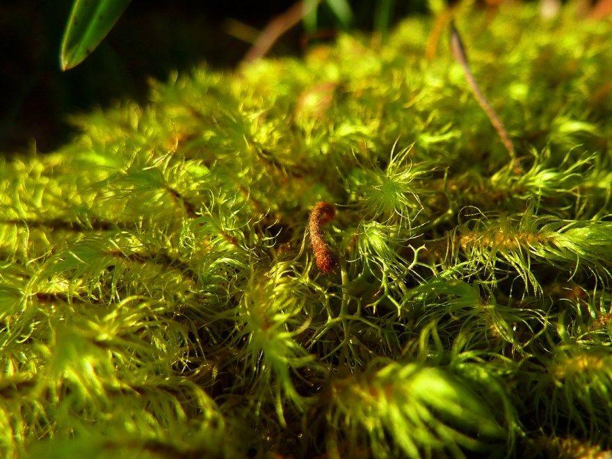 Аквариумные растения фото картинки бесплатные купить скачать анубиас с описаниями названиями