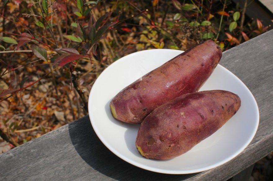 Батат купить рецепты картофель ипомея сладкий фото приготовление ресторан запеченный готовить москва овощ польза калорийность клубни вред корм семена
