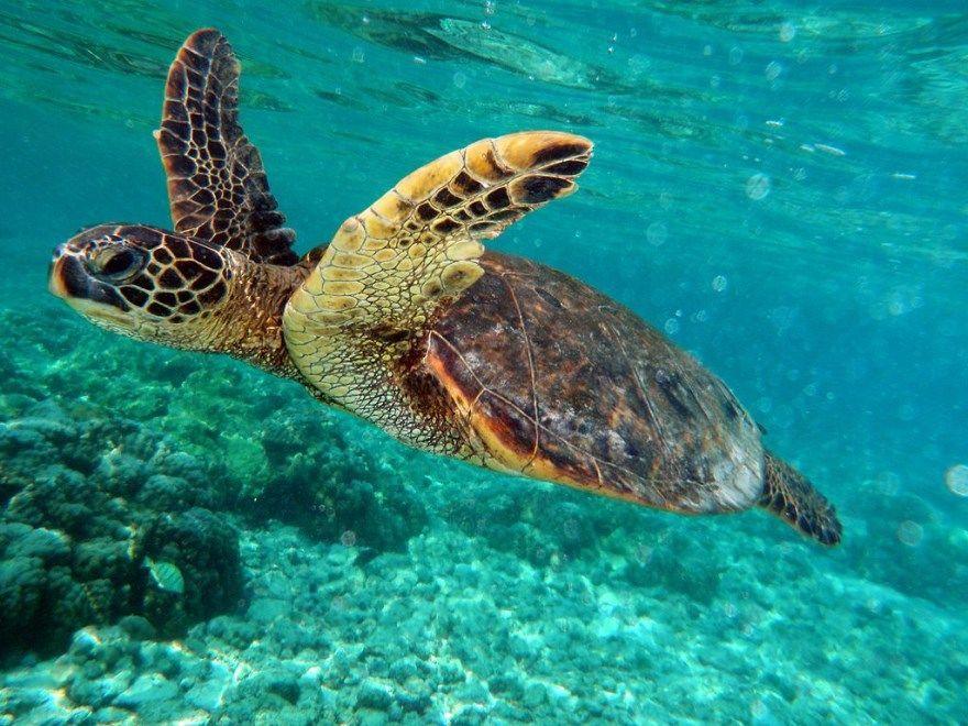 Бисса черепаха большая бесплатно красивый фото картинки скачать смотреть