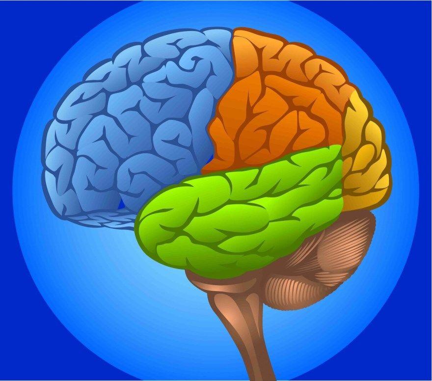 5 советов мозг питание спорт здоровый сон