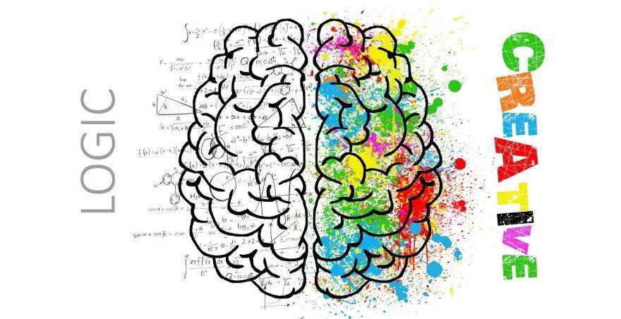 Развитие мозга, развитие полушарий мозга, как развивать мозг, правила мозга