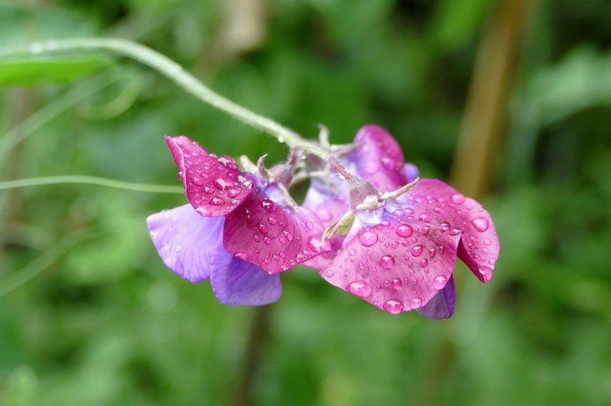 Чина классный служба гражданские государственные отношение богатству чацкого фамусова картинки фото комнатный цветок садовый домашние условия купить скачать онлайн