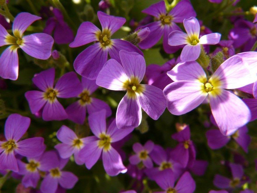 Декоративные растения растущие цветущие лиственные бесплатно для сада красивые