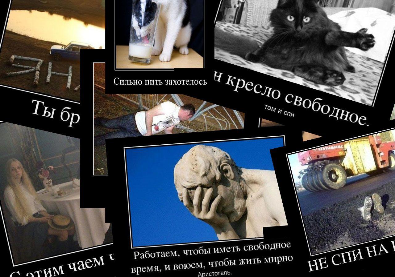 Демотиваторы смешные картинки бесплатно фразы мысли смешно