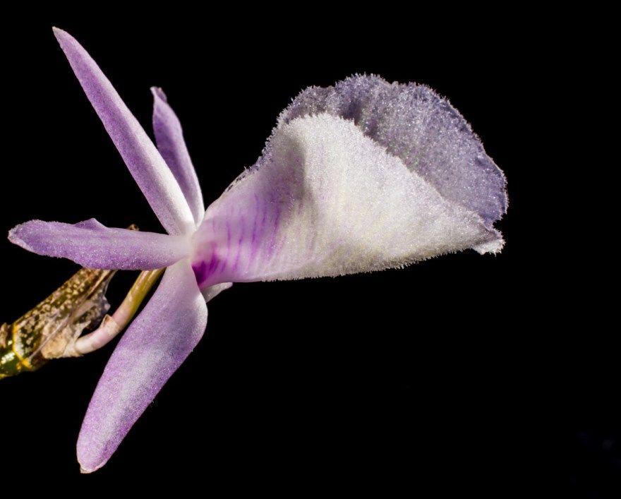 Дикая орхидея картинки фото красивые скачать онлайн красивые лучшие в хорошем качестве