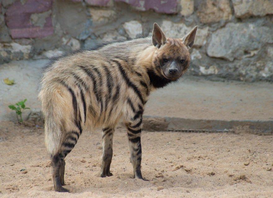фото диких животных красивые России природе мира