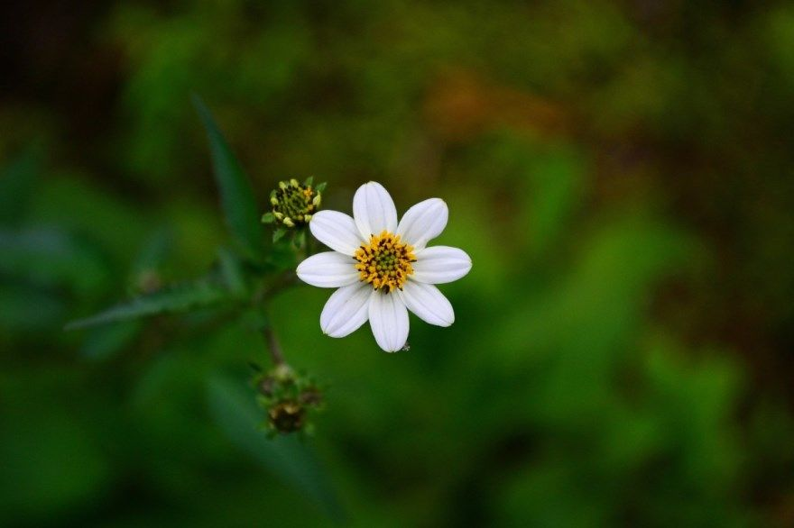 дикорастущие растения фото картинки для забора дачи сада неприхотливые бесплатно скачать смотреть