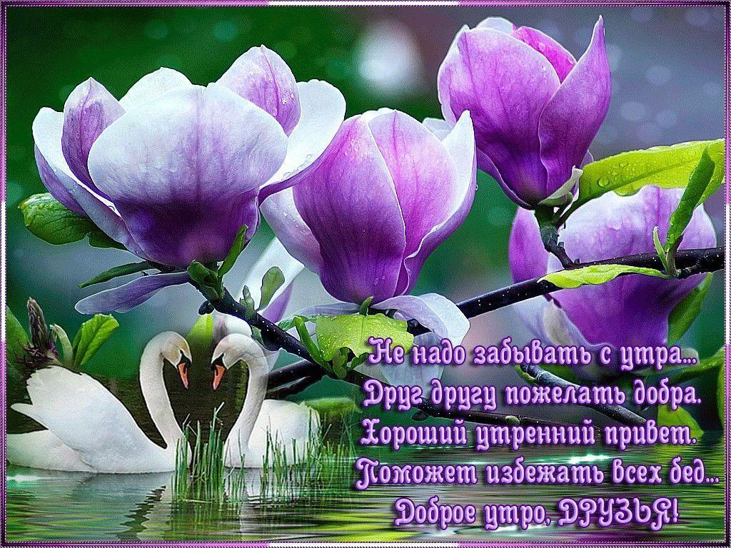 Фото с пожеланиями доброго утра
