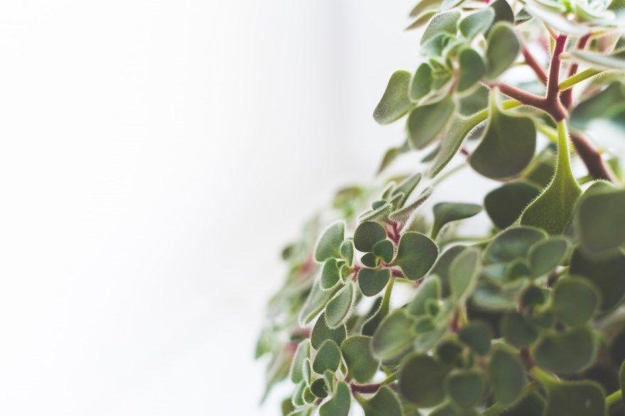 Домашние растения фото картинки цветущие выращенные лунный календарь 2019 год бесплатно