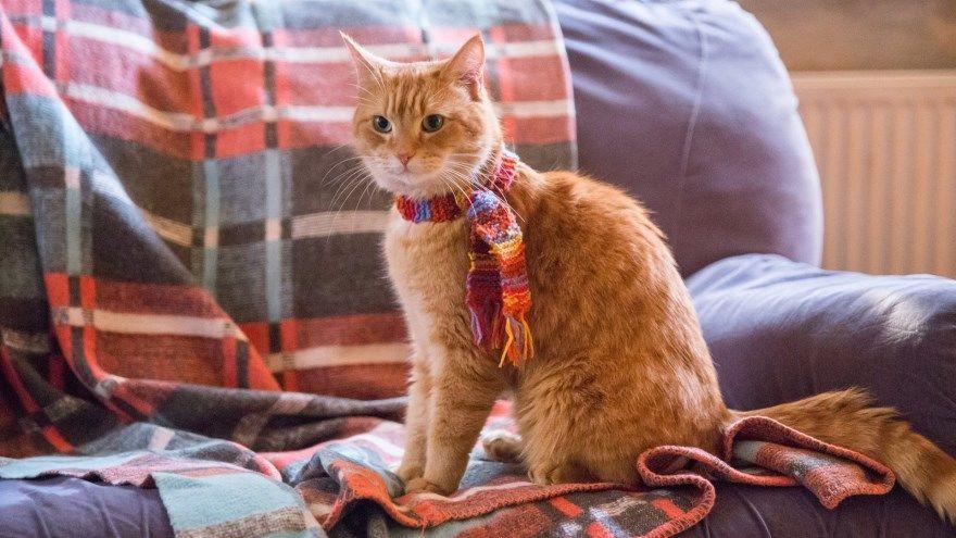 Уличный кот по кличке Боб смотреть скачать бесплатно онлайн 1080 hd