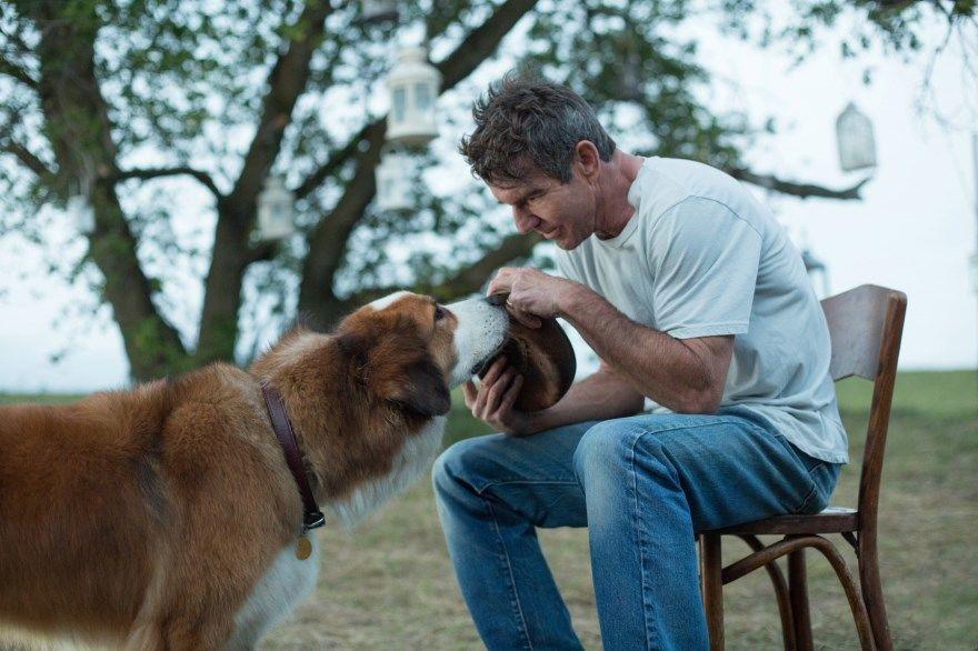 Собачья жизнь смотреть скачать бесплатно онлайн торрент 1080 hd