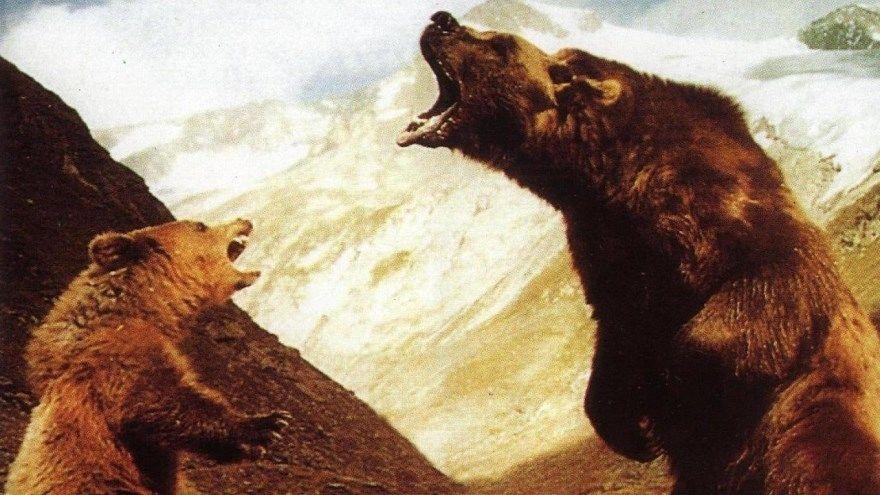 Медведь смотреть скачать бесплатно онлайн 1080 hd