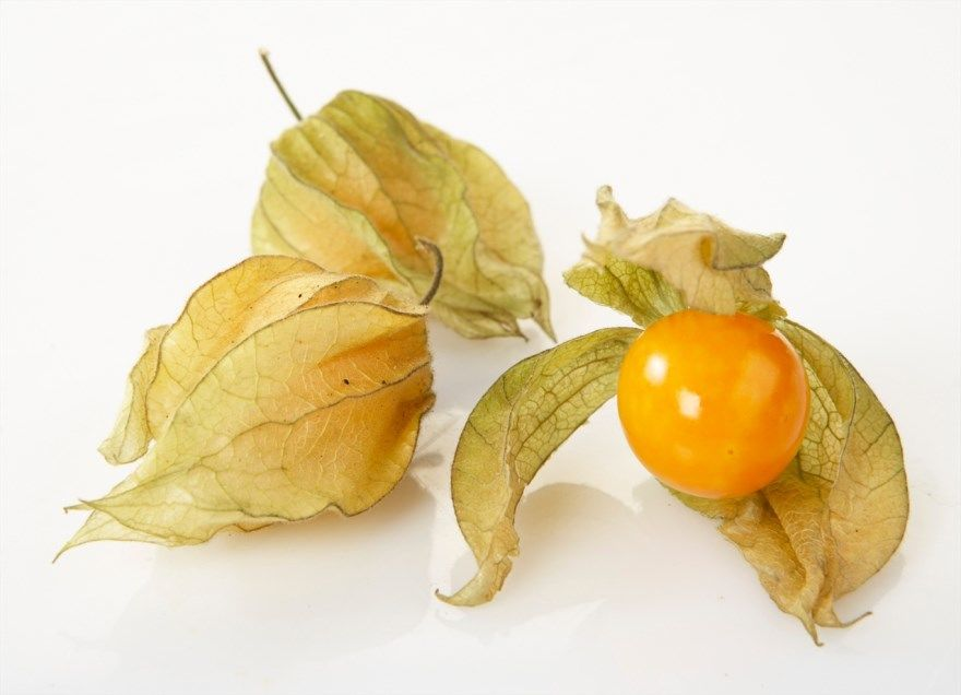 Физалис фото рецепты варенье овощной свойства полезные на зиму съедобный купить выращивание декоративный приготовление употреблять вред польза какой вырастить растения
