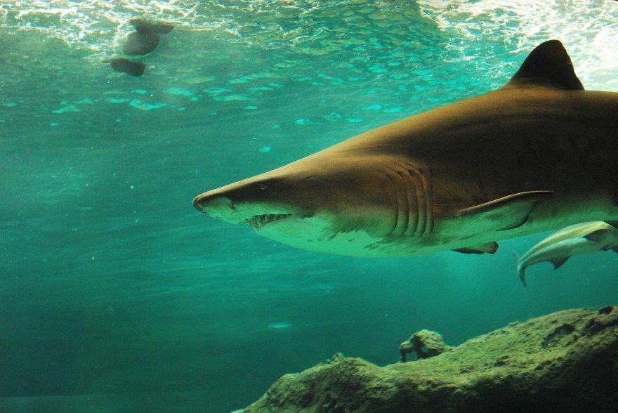 Гигантские акулы фото мег смотреть бесплатно в хорошем качестве онлайн