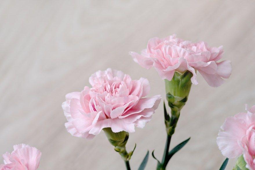 Гвоздика серьга купить золотой фото красные бриллианты цветы белая букет цена турецкие наталья пряность свойства противопоказания