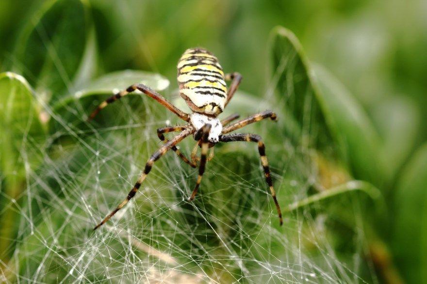 Паук желтый насекомое желто черный красный синий белый смотреть скачать в россии