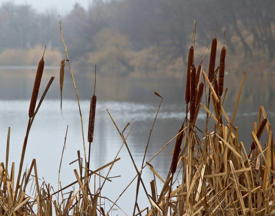 Камыш шумел дерево песня саратов шумел гнулись фото магазин каталог слушать куплю река бальмонт предложения рогоз заросли текст