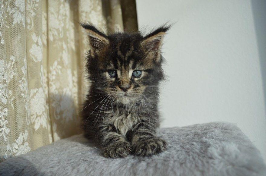 Кошки картинки кот скачать бесплатно милые смешные черные белые женщина котят с собакой срисовка рабочий стол доброе утро с днем карандашом