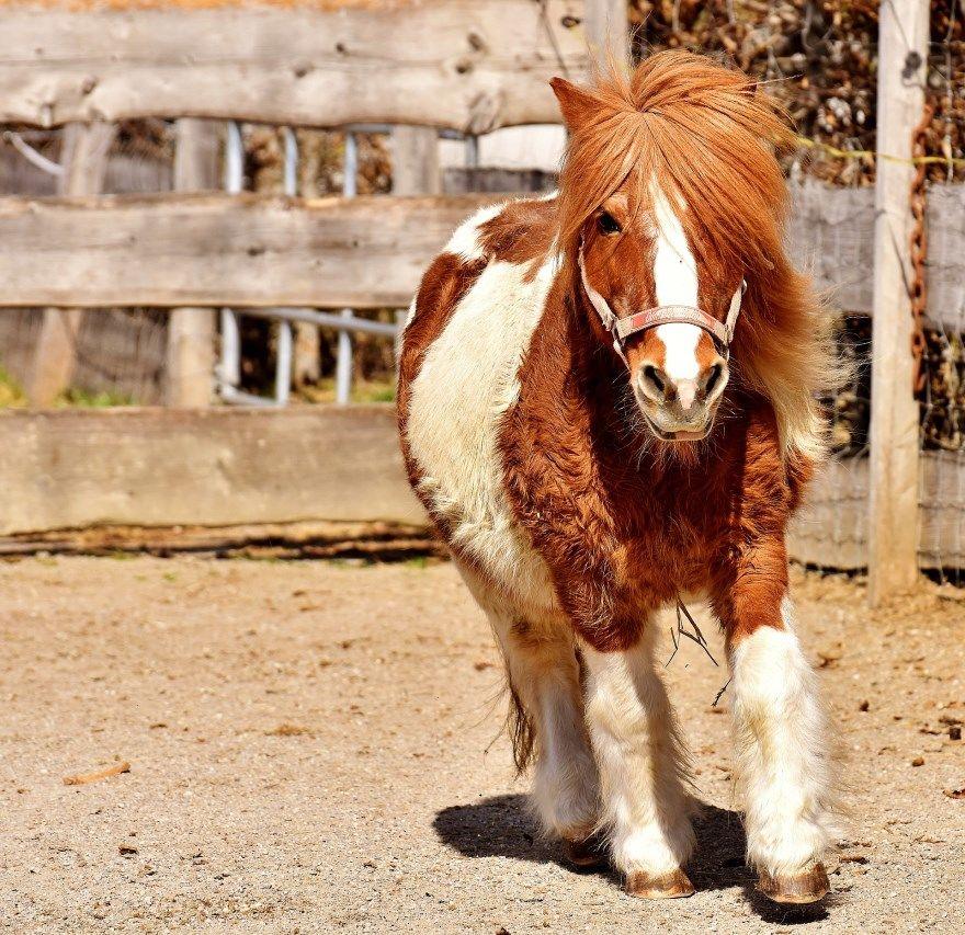 пони картинки фото красивое животное скачать бесплатно онлайн милая