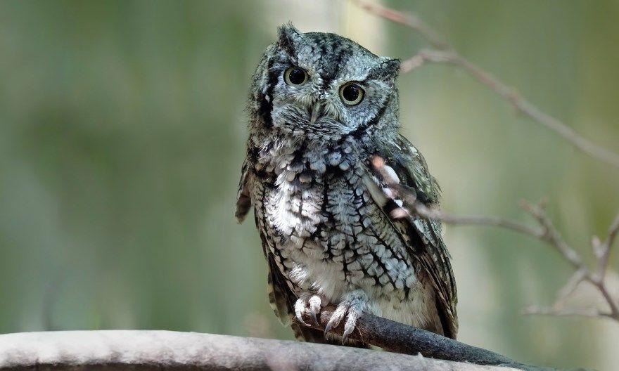 Сова картинки фото купить птица мудрая интернет онлайн лучшие красивые смотреть скачать бесплатно онлайн
