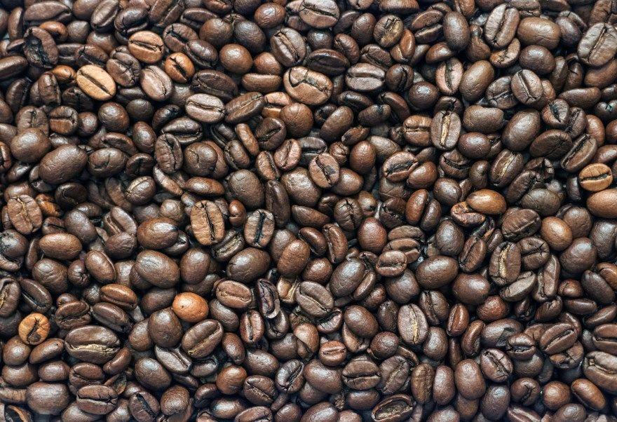 кофейное дерево фото картинки купить в домашних условиях полезными свойствами цветущее бесплатно онлайн скачать