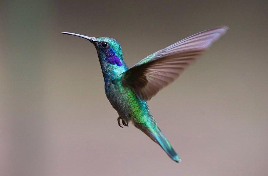 колибри фото картинки скачать бесплатно онлайн в хорошем качестве