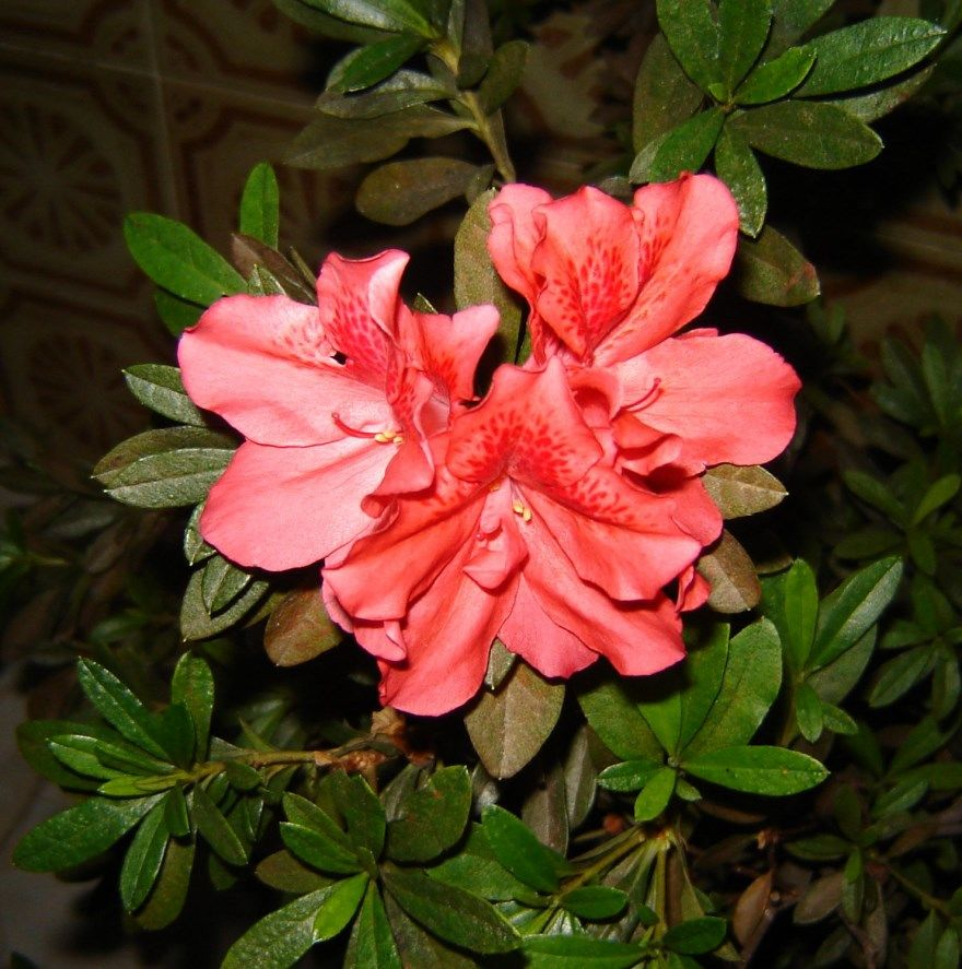 Комнатные растения фото листья какие цветущие
