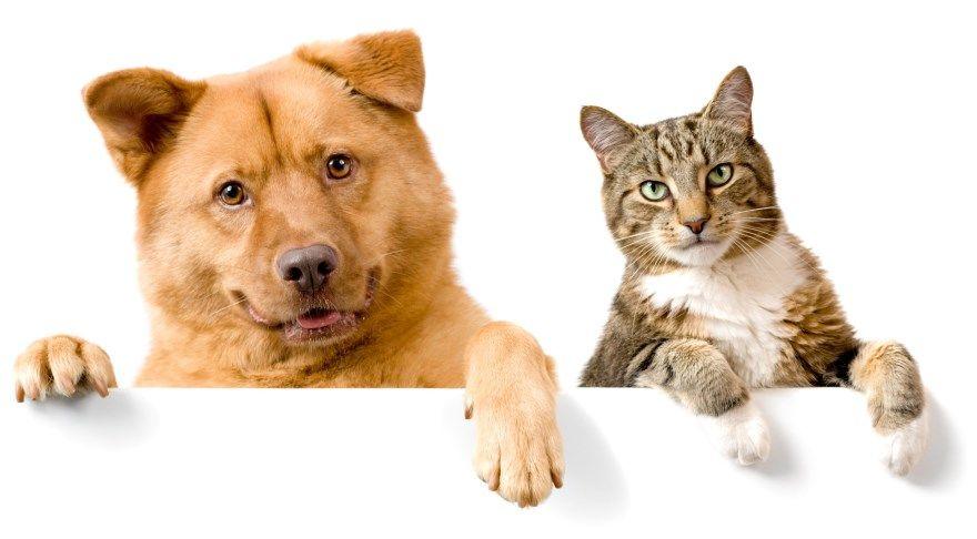 Скачать картинки фото кошек собак смешные бесплатно