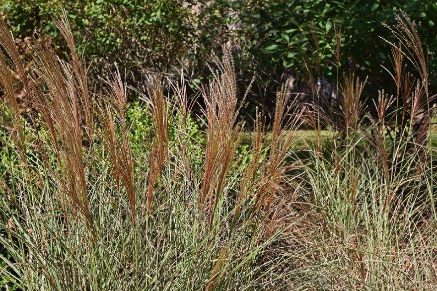 Ковыль спит фото растение равнина трава какой есенина степной перистый слово растет песня испанский белый стихотворение в степи красивейший анализ семена купить