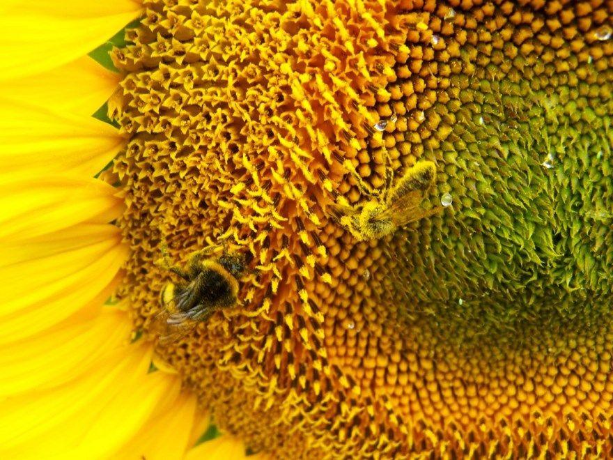 Культурные растения домашние съедобные фото картинки виноград крыжовник смородина рябина сорт почему появились травянистое