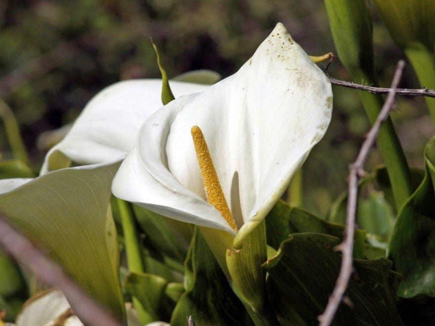 Лунные растения календарь купить цветка с листьями скачать бесплатно онлайн красивого